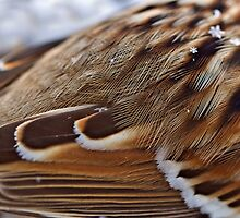 Feathers by Kathy Weaver