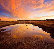 Big Puddle by Bob Larson
