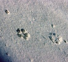 One Small Step for a Cat....One giant leap to a MOUSE... by Larry Llewellyn