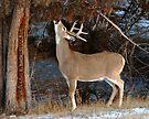 Bucks Reach by Rodney55
