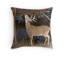 Bucks Reach Throw Pillow