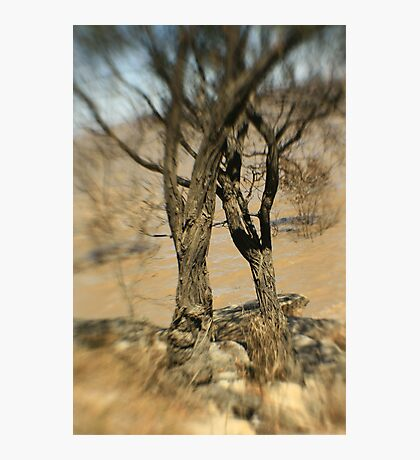 Grow old together Photographic Print
