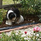 Rupert in his favourite part of the garden by BronReid