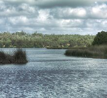 Lake Wagardu, Yanchep National Park, Western Australia by Elaine Teague