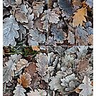 Frozen leaves by Ilva Beretta