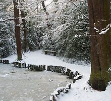 A Winter Walk in the Woodlands: Dulwich Woods, London, UK. by DonDavisUK