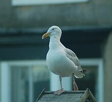 Patient Seagull by shermank