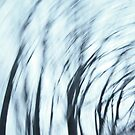Wind Series I by Lena Weiss