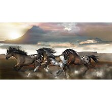 Wild and Free - The Mustangs Photographic Print