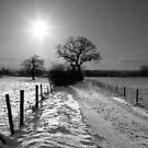 Wintery Track... by stellaozza