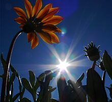 Sunny Side Up by MacroMarcie