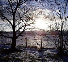 Low sun on snowy fields by judith murphy