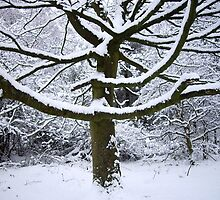 Snow tree by judith murphy