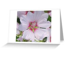 White and Pink Hollyhock Greeting Card