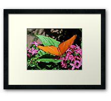 IMG-0765 Framed Print