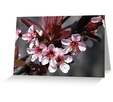 Light Pink Blossoms 2 Greeting Card
