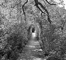black and white wellfleet path  by cetrone