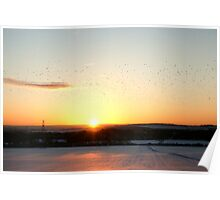 The migration at sunset Poster