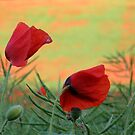Poppy Field by IngridSonja