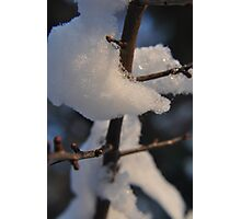 The Cold Thorn Photographic Print