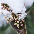 Buds on ice by loz788