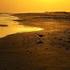 Bird on Beach by ValorieB