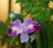 Purple Majesty by Gregory Learned