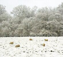 Winter Wan by missmoneypenny