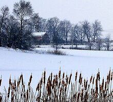 Cattail Plants by Brian Gaynor