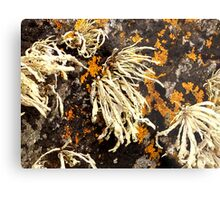 Seaweed And Rust...............................Most Products Metal Print