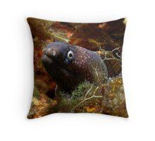 Mediterranean moray eel Throw Pillow