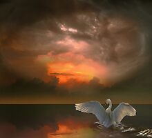 Swan's Dream by Igor Zenin