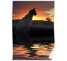 Sunset Feline Poster