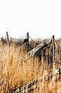 Old Fence - Swansea, Massacusetts by T.J. Martin
