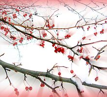 Red berries by Olga