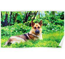 German Shepherd Dog Poster