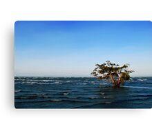 Nudgee Beach Mangrove Canvas Print
