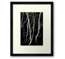 mangroves from Nudgee Beach Framed Print