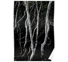 mangroves from Nudgee Beach Poster