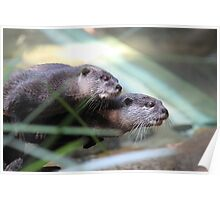 Anxious otters Poster