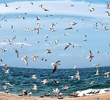 Seagulls by Caleb Ward