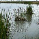 On the Edge - The edithvale Marshlands by Jason Kiely