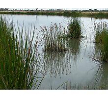 On the Edge - The edithvale Marshlands Photographic Print
