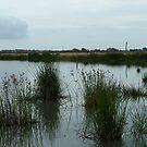 Camoflage- The Edithvale Marshlands by Jason Kiely