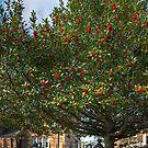 Rowan Tree by Tom Gomez