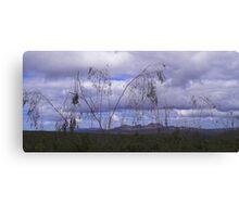 Weeping Gumtree, Fitzgerald Ranges Canvas Print