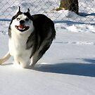 Bella Running Through the Snow by Deborah  Allen