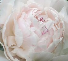 Pale Pink Peony 1 by art2plunder