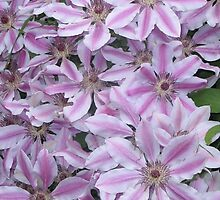A Blanket of Clematis by art2plunder