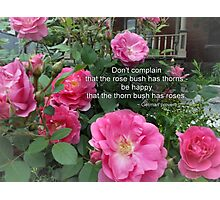 Rose Bush Happy Pink Roses German Proverb Photographic Print